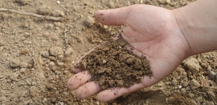 Określanie żyzności gleby